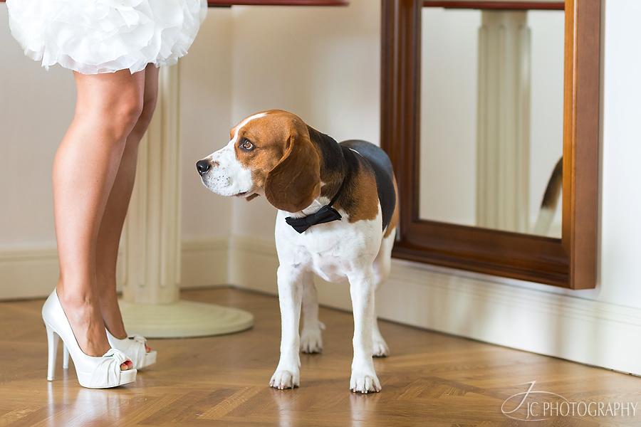 17 Fotografii Beagle
