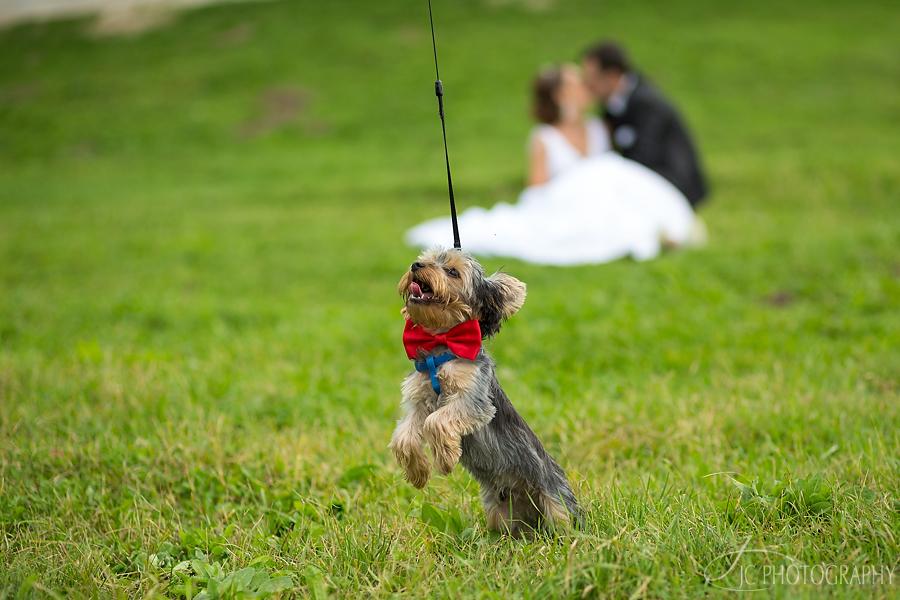 18 Sesiune foto dupa nunta Cluj