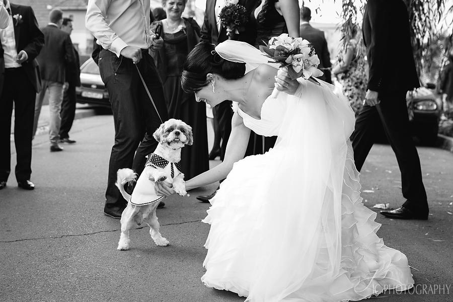 16 Fotografii nunta Alba Iulia