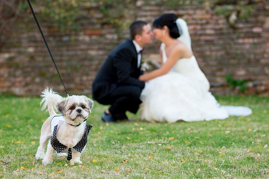 30 Fotografii nunta Alba Iulia