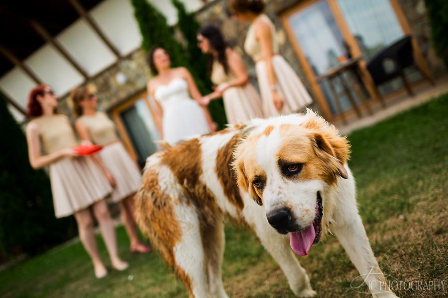 09 Fotografii nunta Golf Hotel Pianu