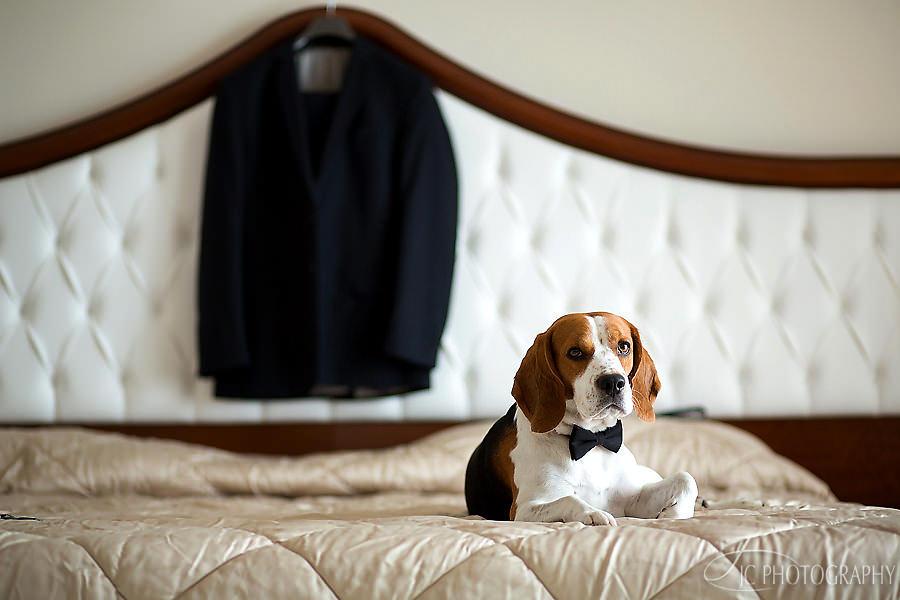 21-beagle-nunta